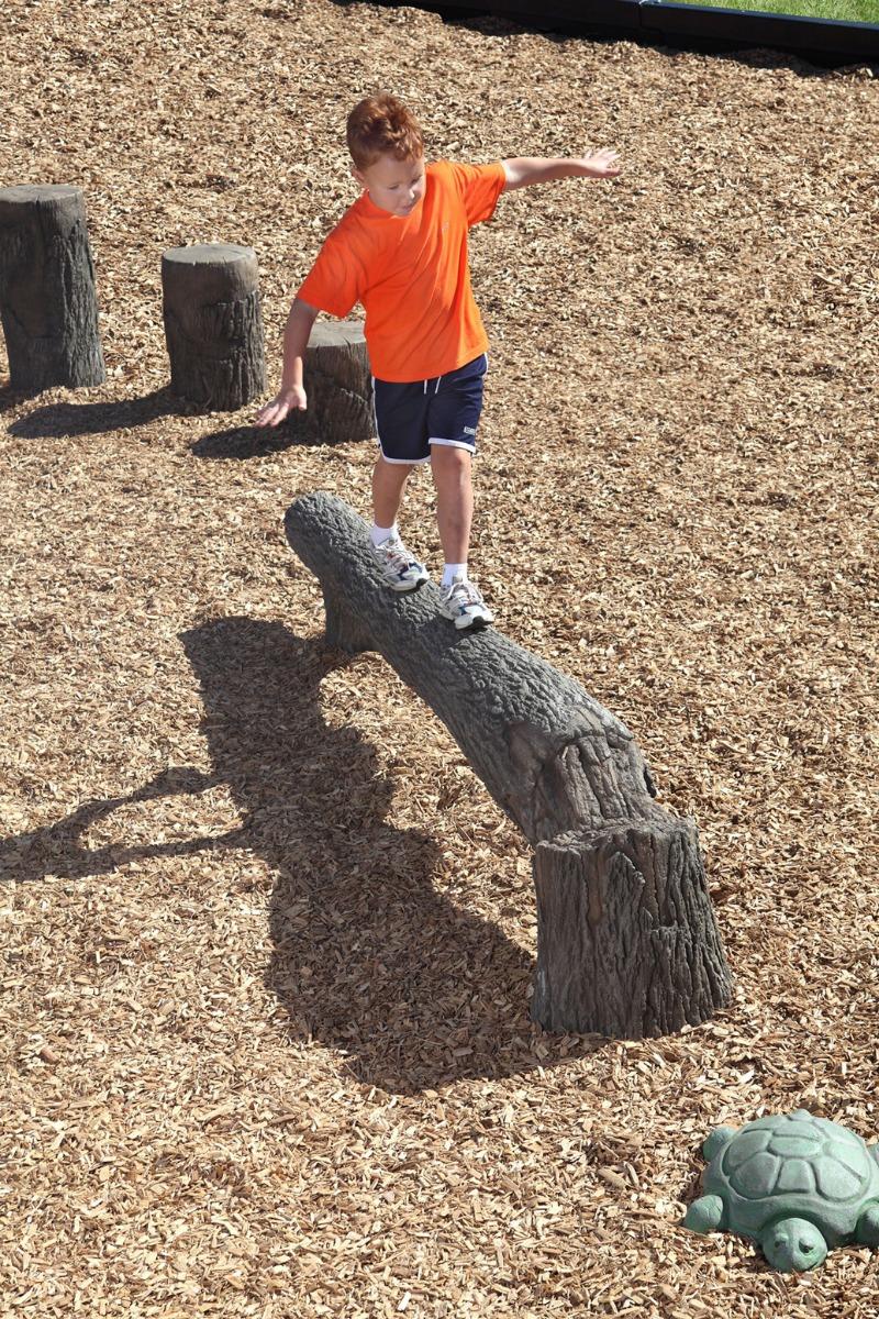 fallen tree balance beam | balance - natural