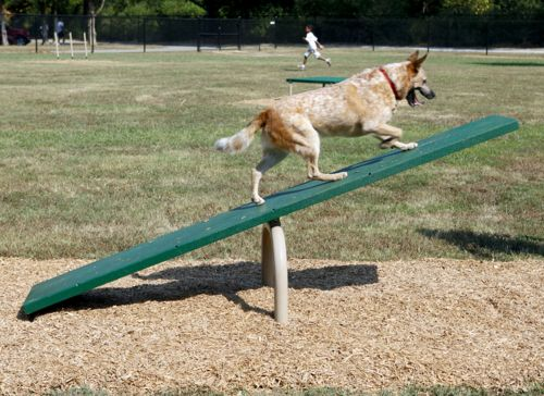 Teeter Totter - Dog Park Equipment - American Parks Company