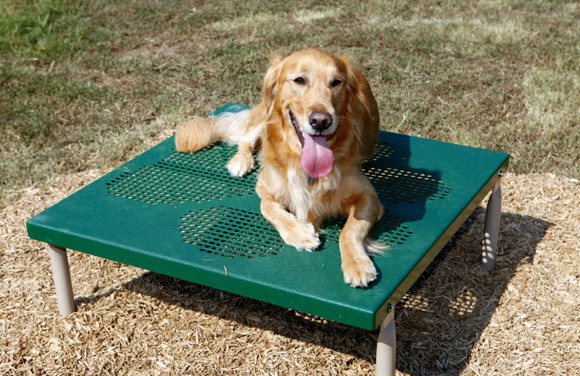 Paws Table - Dog Agility Equipment - Multifamily Playgrounds - American Parks Company