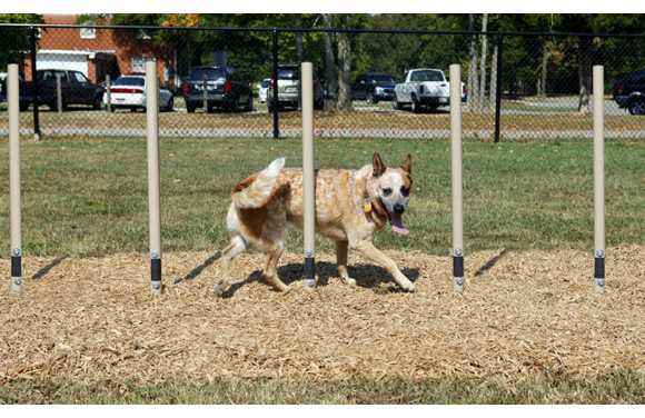 Weave Posts - Dog Agility Equipment - American Parks Company